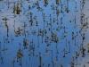utricularia-australis-037
