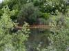 utricularia-australis-079