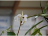 2017-05-13_15187-heliamforos-ziedas
