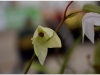 2017-05-13_15190-heliamforos-ziedas