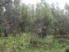 varnikai-2012-038