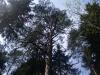 varnikai-2012-063
