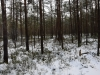 varnikai-ziema-031