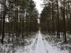 varnikai-ziema-036