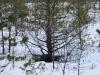 varnikai-ziema-049