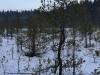 varnikai-ziema-050