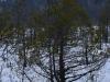 varnikai-ziema-052