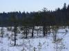 varnikai-ziema-064