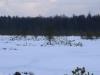 varnikai-ziema-068