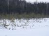 varnikai-ziema-073
