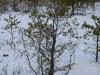 varnikai-ziema-080