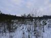 varnikai-ziema-081