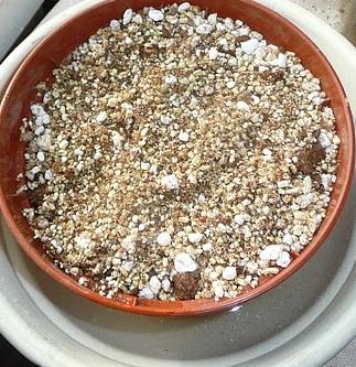 Substratu užpildytas vazonėlis