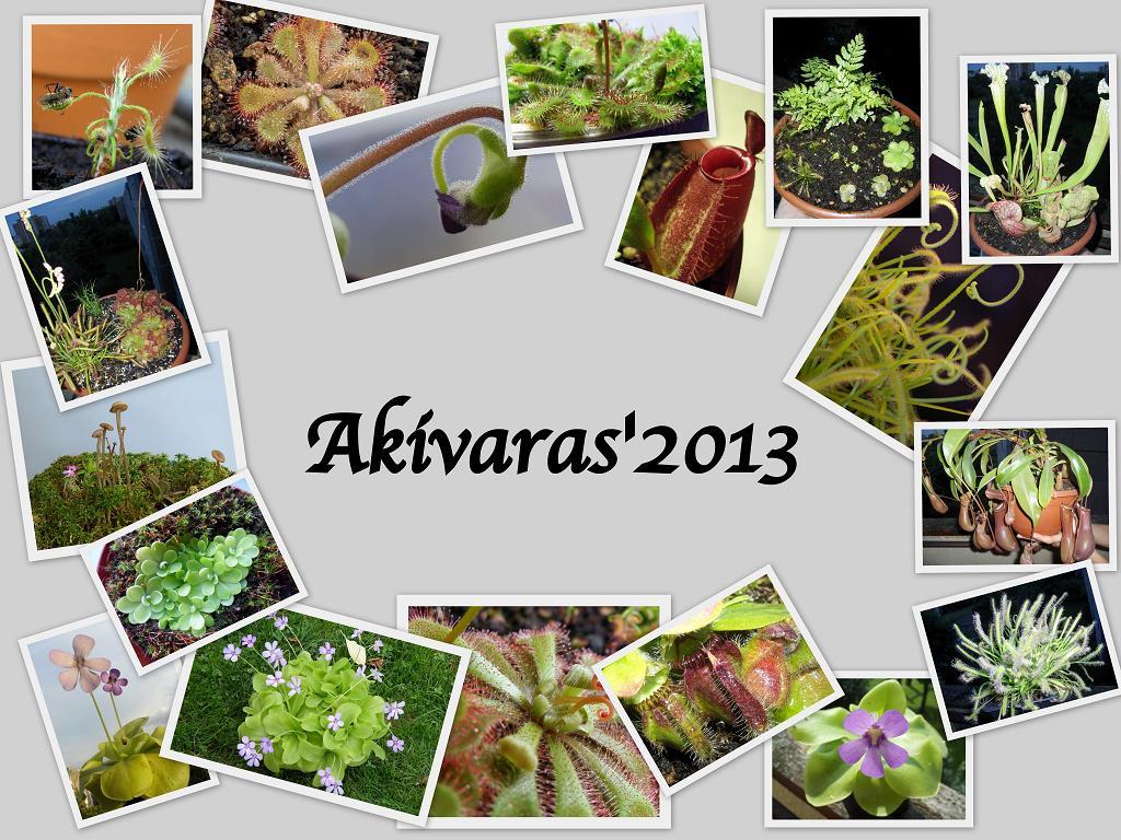 Akivaras 2013