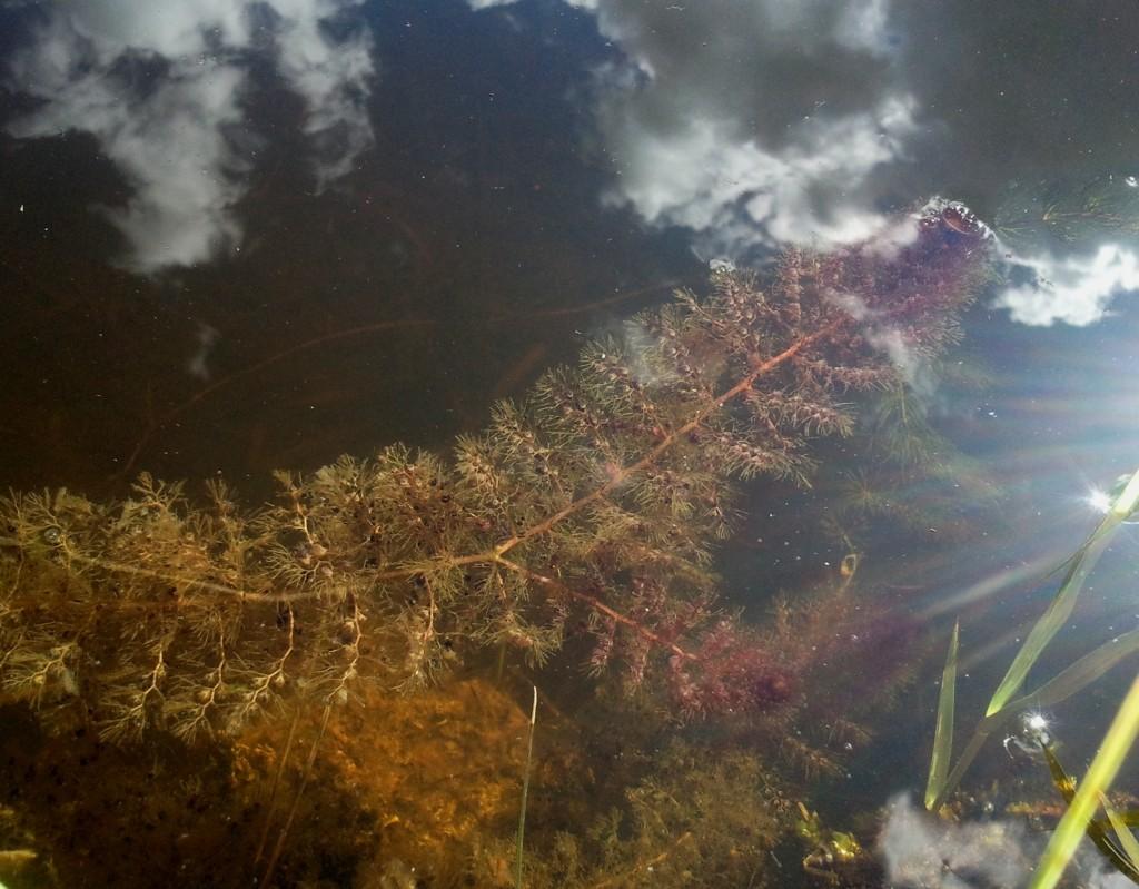 Skendenis, pagavęs debesį