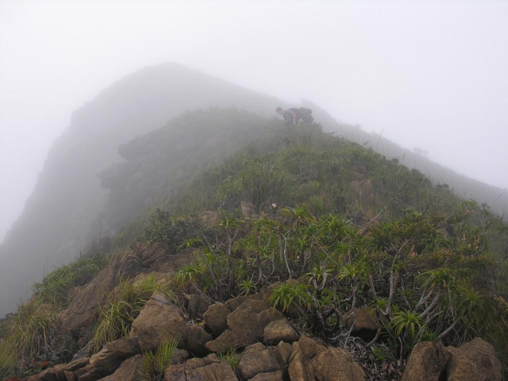 Victorijos kalno viršūnė