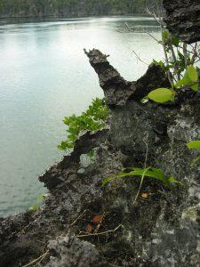 """Labai aštrūs ir dantyti Misool salos skardžių """"ašmenys"""""""