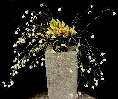 Utricularia asplundii visame savo grožyje