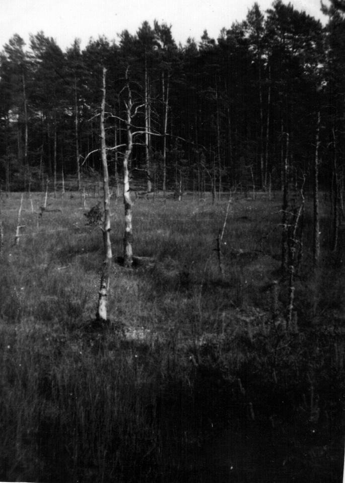 Jogaila Mackevičius. Iš seno albumo, 1991-ieji. Raganų dauba Puvočių apylinkėse.