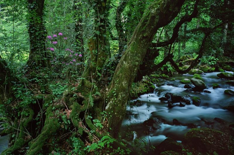 Mtiralos nacionalinis parkas