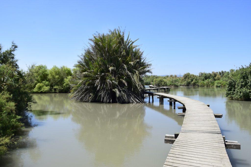 Pažintinis takas per pelkėjantį ežerą (c) Jogaila Mackevičius