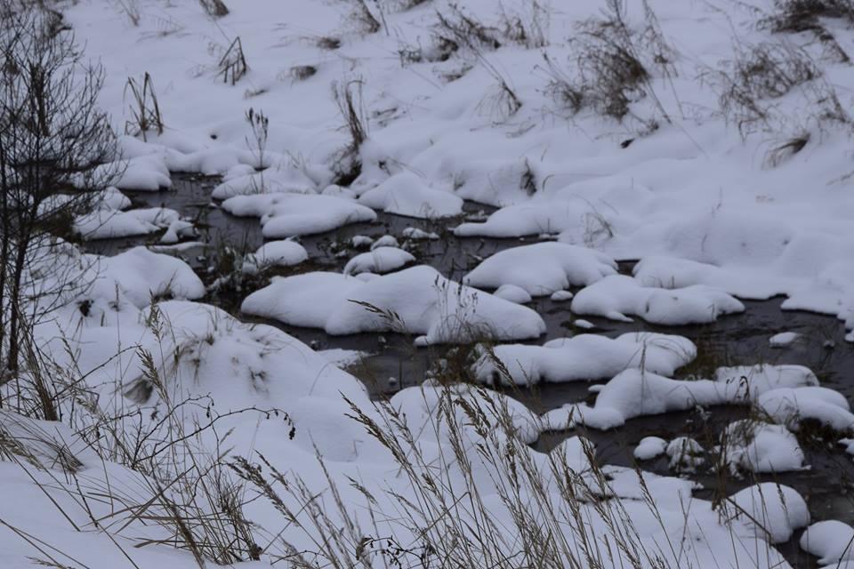 Po sniegu miegančios irisų salelės